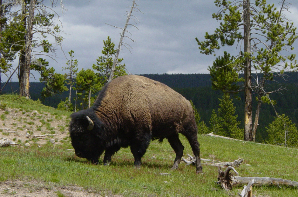 Flathead Lake Inn is convenient lodging when visiting National Bison Range Moiese.